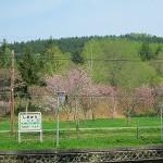 塩狩峠の一目千本桜
